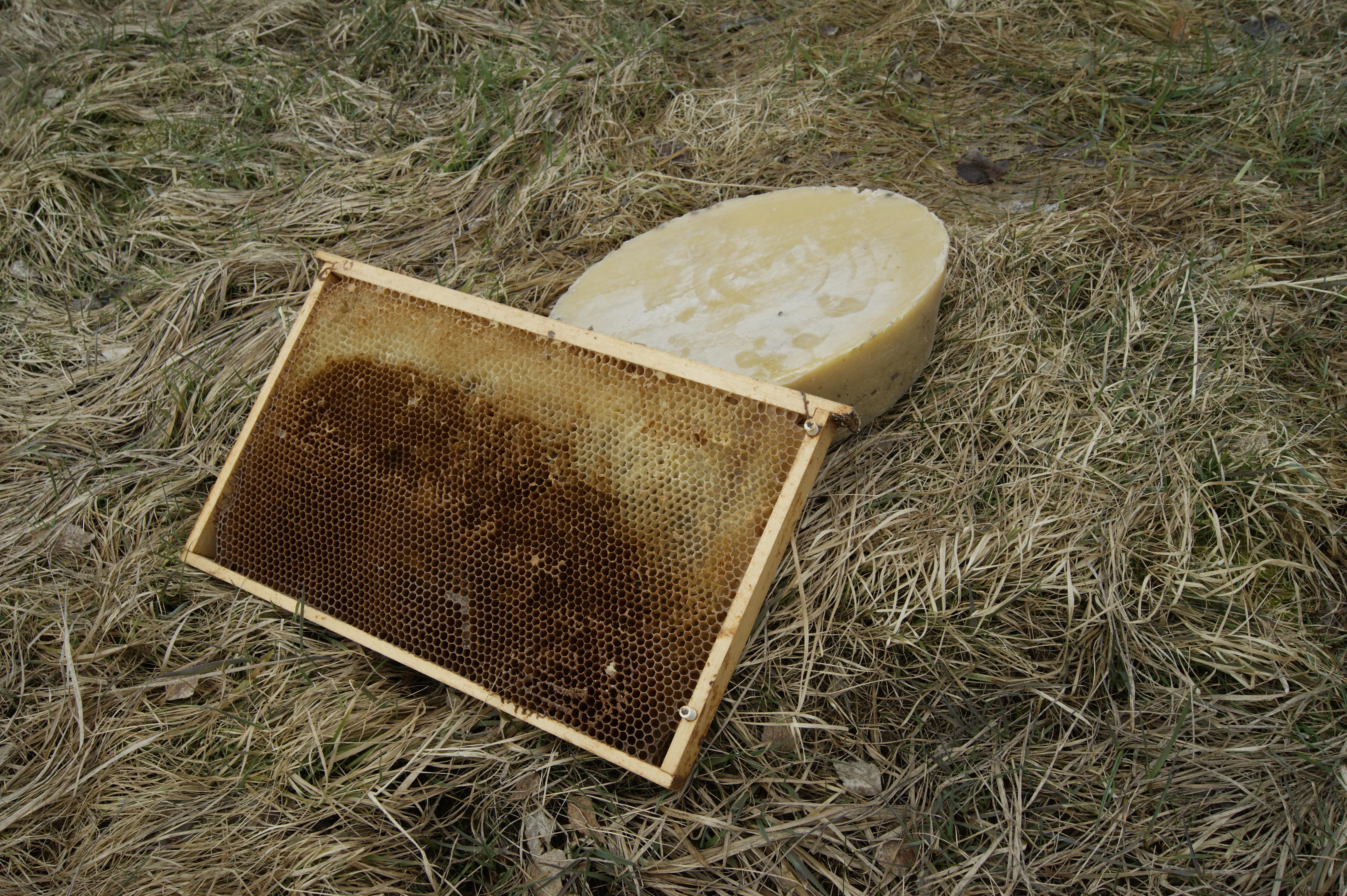 O včelách a původu včelího vosku 🐝